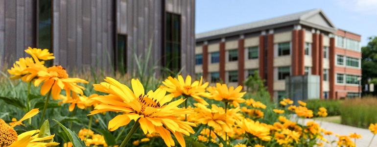 flowers in front of Laurel Hall